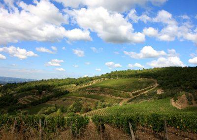 San Fabiano Calcinaia - Cellole - Chianti wine online