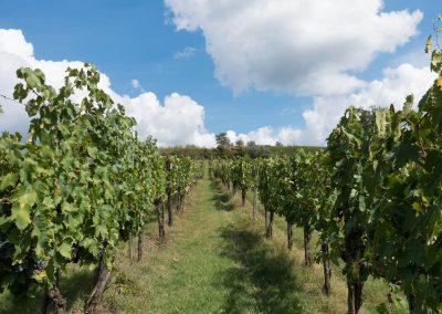 San Fabiano Calcinaia - Produzione Vino - Wine shop Chianti