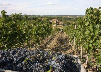 San Fabiano Calcinaia - Vendita vini Toscani - selling Italian wines